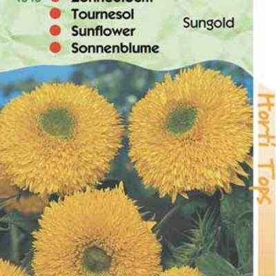 tournesol , sungold double jaune , en sachet