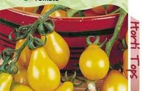 Tomate Yellow Pearshaped, en sachet Le sachet de 0,5grs