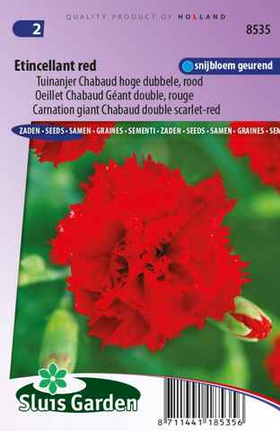 Oeillet Etincellant Red - Dianthus Chabaud