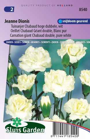 Oeillet Jeanne Dionis - Dianthus Chabaud