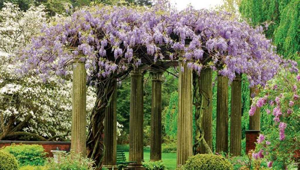 les 19 meilleures plantes grimpantes pour pergolas ou tonnelles. Black Bedroom Furniture Sets. Home Design Ideas